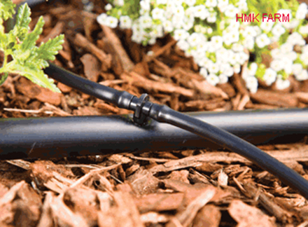 ống PE 16mm sử dụng tưới sân vườn