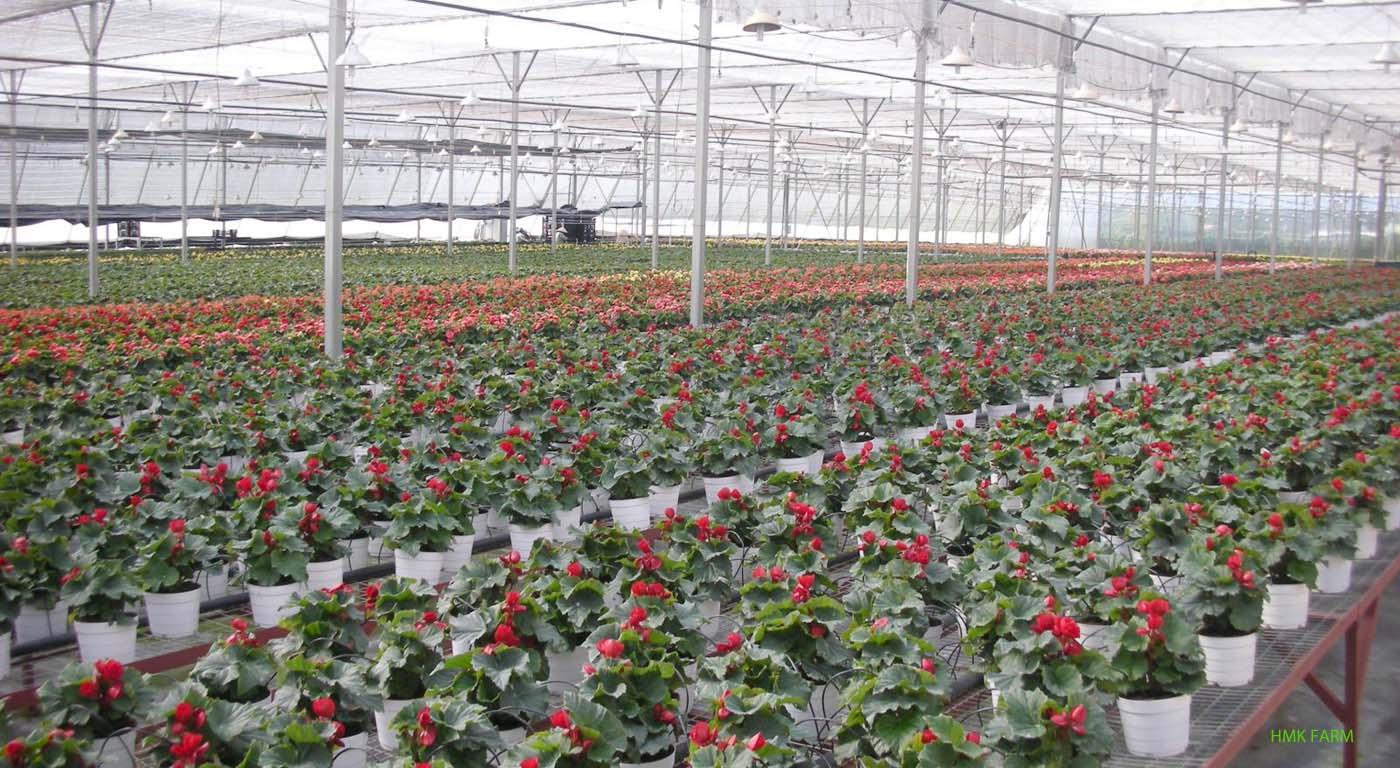 Ứng dụng nông nghiệp công nghệ cao Lâm Đồng