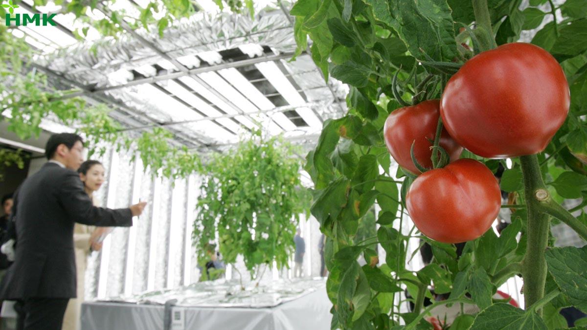 Ứng dụng nông nghiệp công nghệ cao tại Nhật Bản