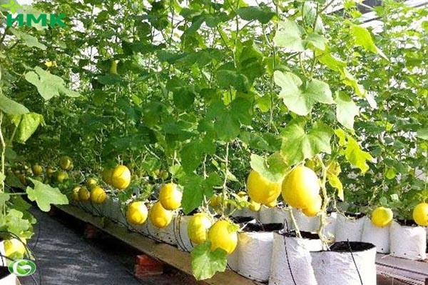 Ứng dụng nông nghiệp cao tpchm