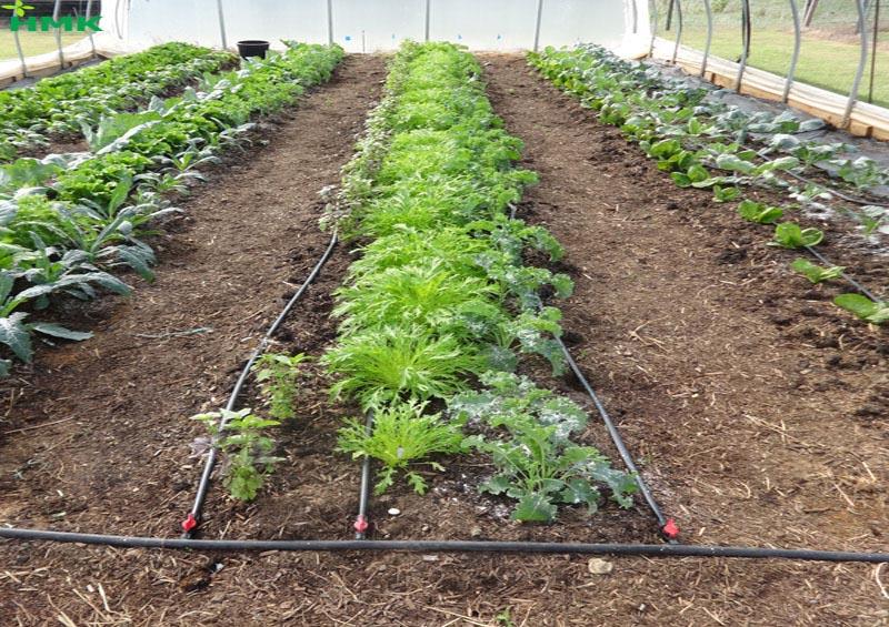 Ứng dụng tưới nhỏ giọt sân vườn