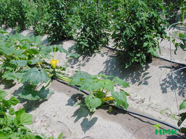 Tưới nhỏ giọt sân vườn giúp tiết kiệm nước