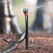 Tưới phun mưa tại gốc - micro sprinkler