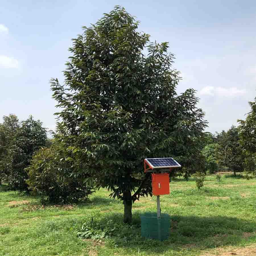 Dự án điều tiết nước và dinh dưỡng cho cây sầu riêng ri 6 theo cảm biến